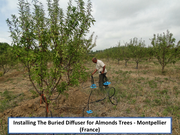 Installing the Buried Diffuser for Almonds Tree in France
