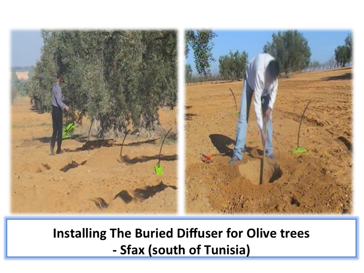 Plan view of trees irrigation with burried diffusers