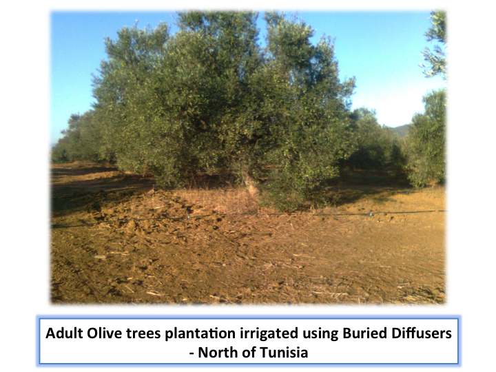 Cross section of trees irrigation with burried diffusers